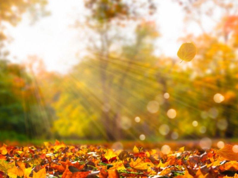 Осенняя романтика: 5 осенних фильмов